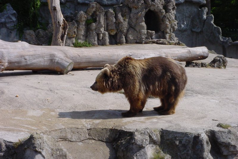 Photos d'ours 1
