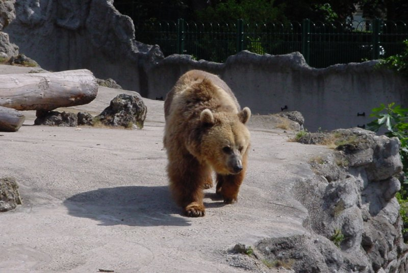 Photos d'ours 2