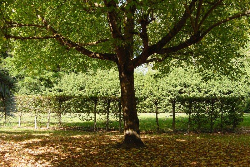 Photos d 39 arbres - Mousse sur les arbres ...