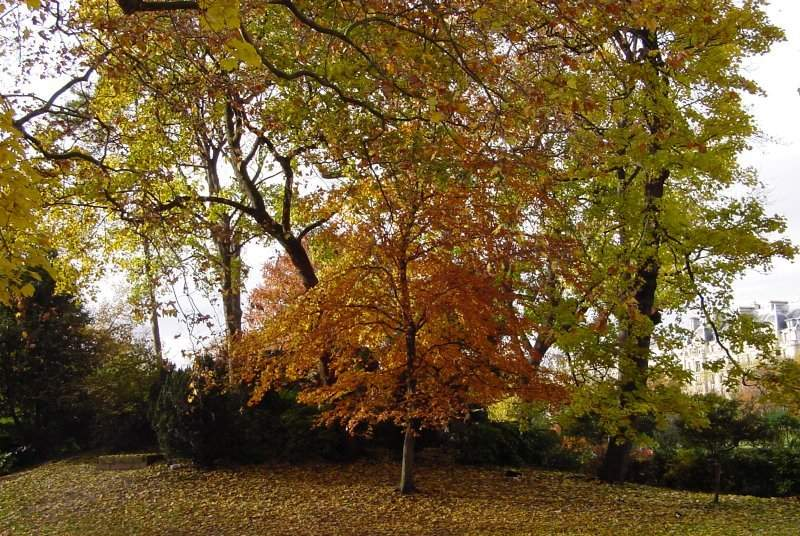 Photos d'arbres 3